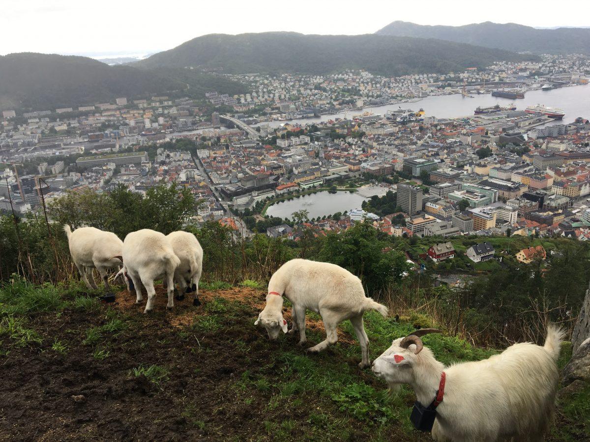 Nydelig utsikt over Bergen